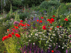 A vibrant garden containing several types of plants and colorful flowers.